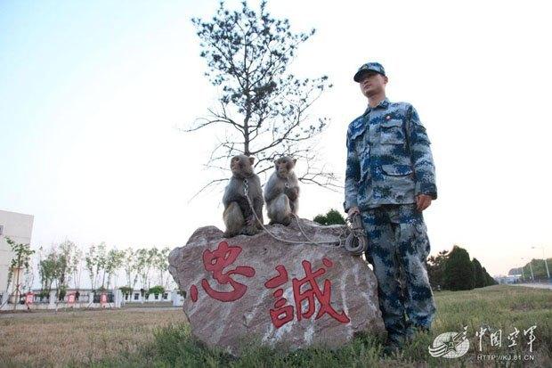 Китайские ВВС взяли на службу взвод обезьян. Изображение № 1.