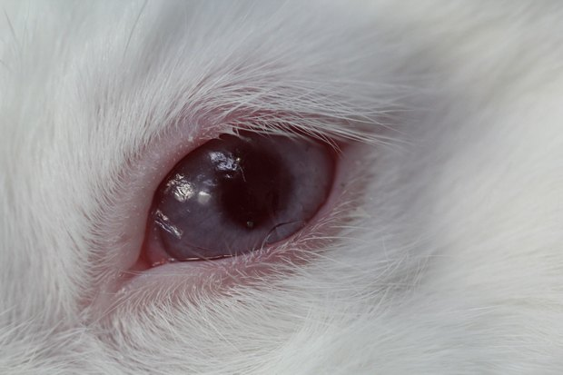 Корейские ученые создают «умные» контактные линзы. Изображение № 2.
