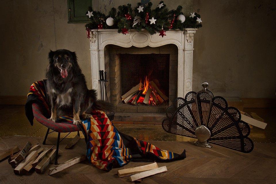 Ревизия пледов: Счастливого тебе Рождества, старый пёс. Изображение № 5.