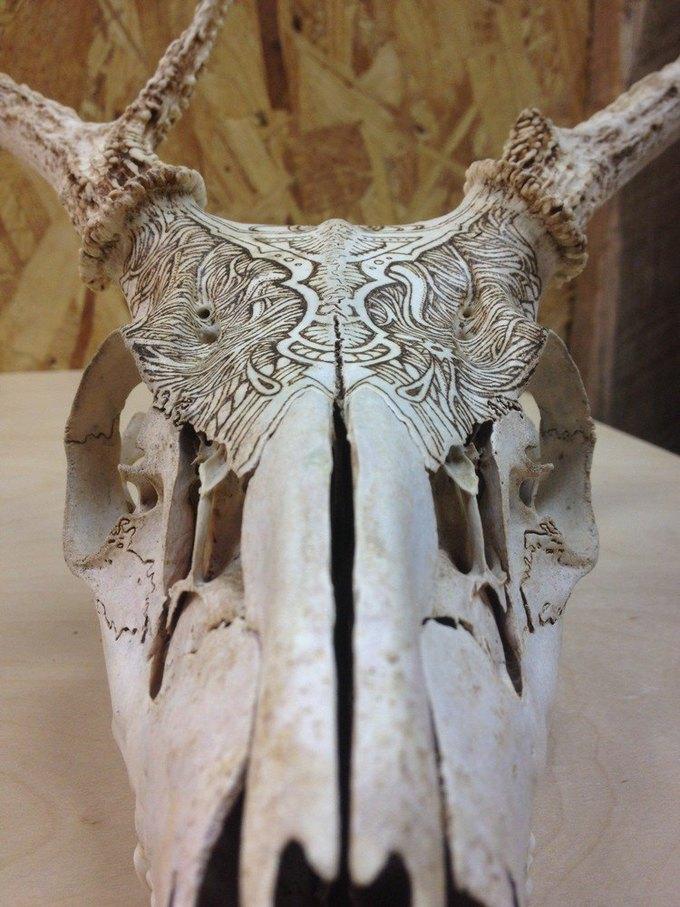 Питер Дроус: Пирография на черепах диких зверей. Изображение № 9.
