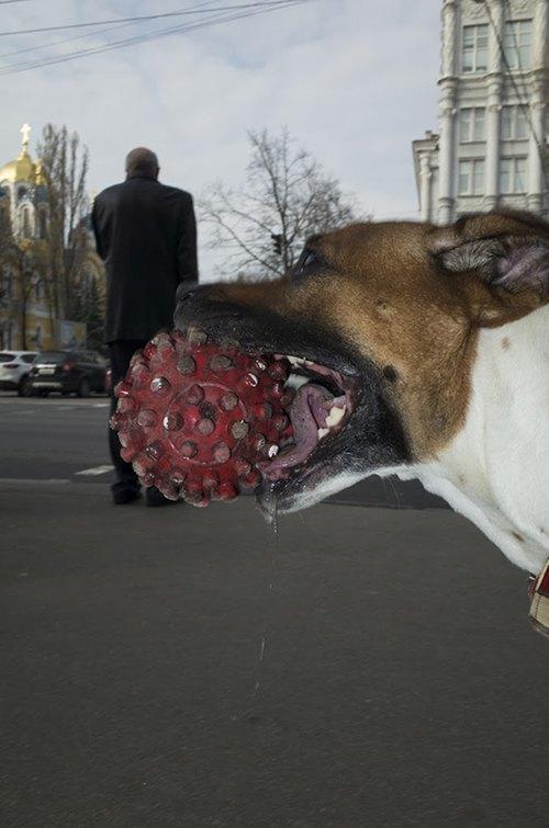 Миша Бочкарев: Украинская уличная фотография нового времени. Изображение № 6.