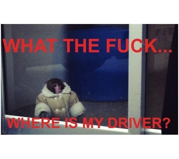 В Канаде обезьяна в пальто зашла в магазин IKEA. Изображение №20.