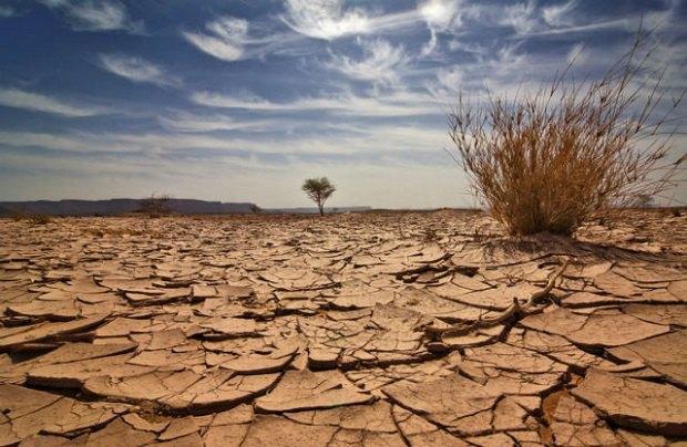 Жизни на Земле предстоит шестое массовое вымирание. Изображение № 1.