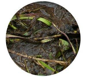 Ревизия: Непромокаемые ботинки в московской грязи. Изображение № 9.