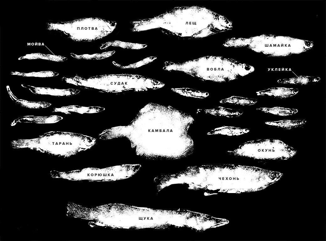 Эх, хвост-чешуя: 13 видов вяленой рыбы. Изображение № 2.