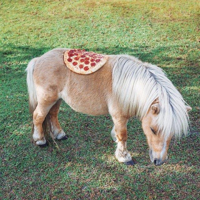 Pizza in the Wild: Приключения пиццы пепперони в проекте Джона Пола Дугласа. Изображение № 14.