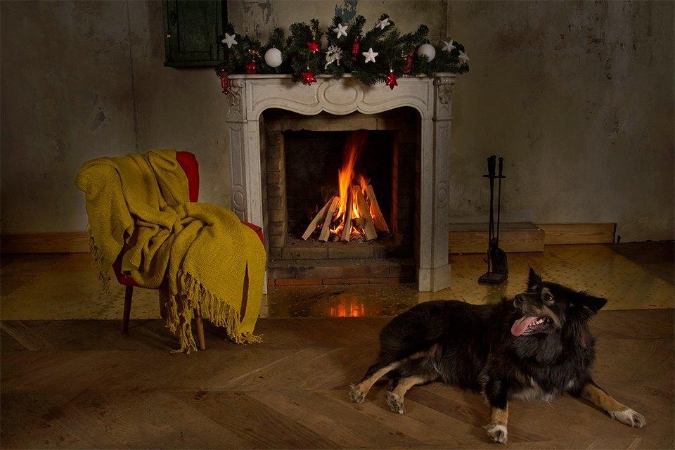 Ревизия пледов: Счастливого тебе Рождества, старый пёс. Изображение № 1.