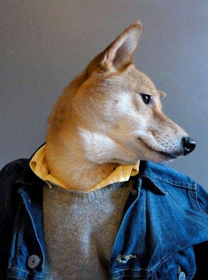 В новом блоге на Tumblr собака демонстрирует мужскую одежду. Изображение № 2.