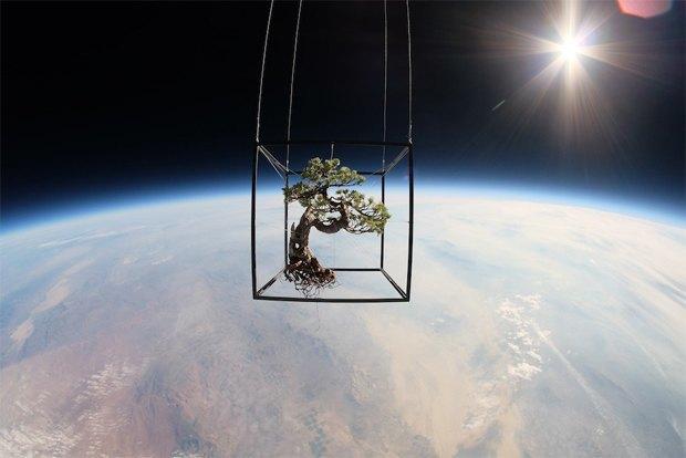 8 странных вещей, отправленных в космос. Изображение № 2.