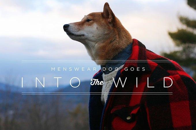 Как стильная собака стала зарабатывать больше тебя: История успеха menswear dog. Изображение № 3.