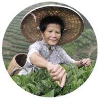Чайный пьяница: Путеводитель по чаю тегуаньинь. Изображение № 7.