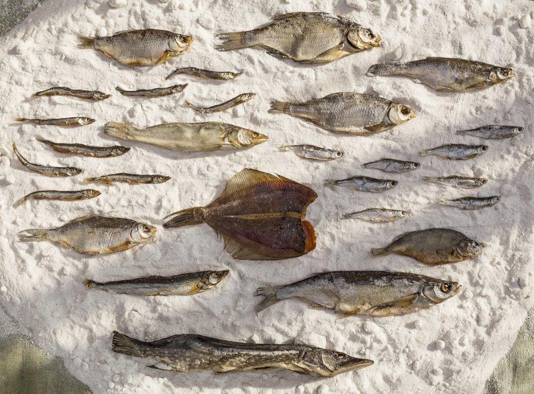 Эх, хвост-чешуя: 13 видов вяленой рыбы. Изображение № 1.