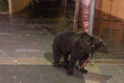 Испанец оставил возле бара медведя гризли и пошёл выпивать. Изображение № 1.