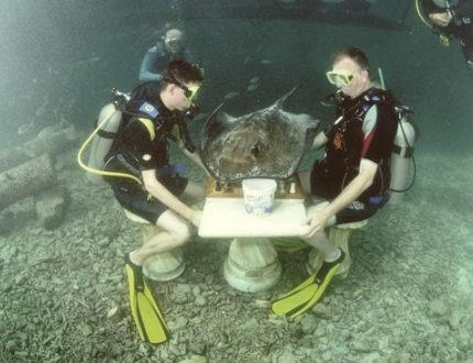 Неолимпийские игры: Квиддич, подводное регби, метание тунца и еще 15 необычных соревнований. Изображение № 30.