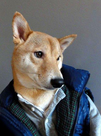 В новом блоге на Tumblr собака демонстрирует мужскую одежду. Изображение № 1.