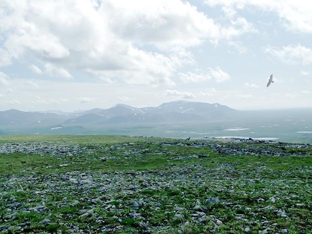 «Были только мы, олени, опять олени и рыба»: 7 дней английского телеведущего на Ямале. Изображение № 8.