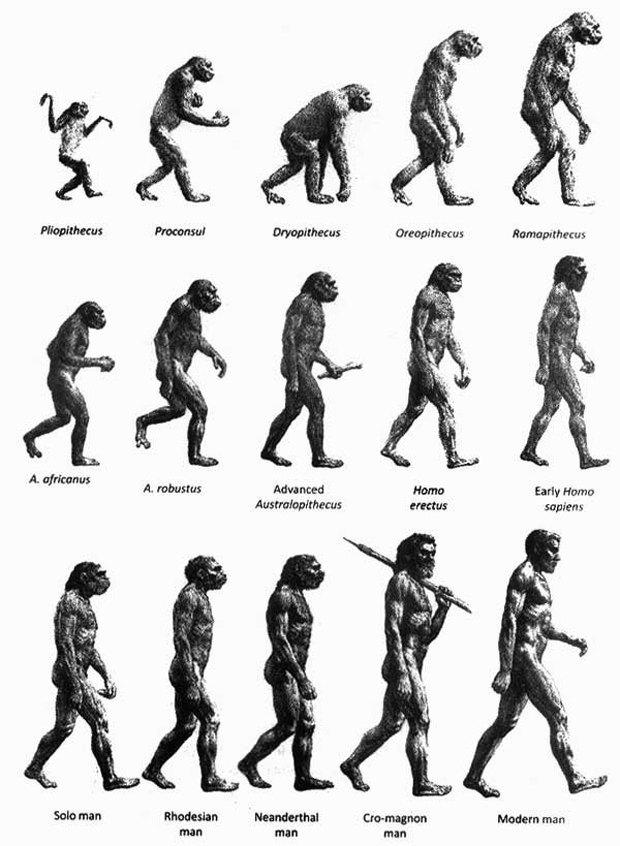 Ученые нашли новый вид в родословной человека. Изображение № 1.