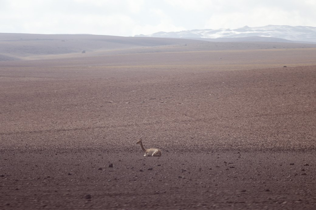 Буря в пустыне: Фоторепортаж с ралли «Дакар-2014» . Изображение № 10.