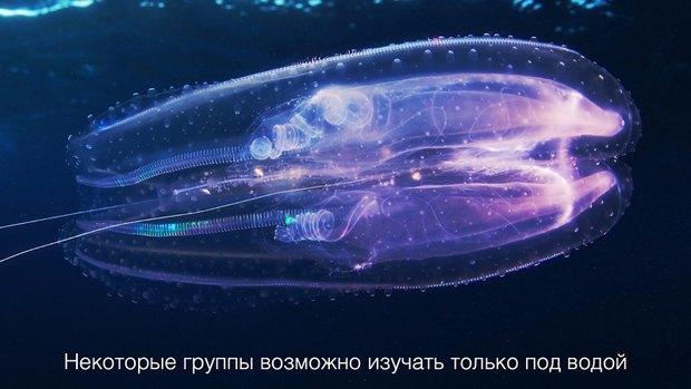 Российские ученые-энтузиасты собирают 1,5 млн рублей на кругосветную экспедицию. Изображение № 8.