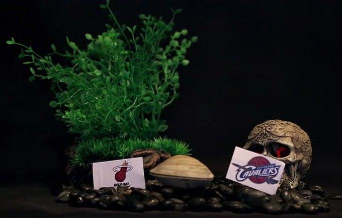 Моллюск предсказал переход баскетболиста Леброна Джеймса в «Кливленд». Изображение № 1.