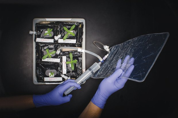 NASA решило вырастить салат в космосе . Изображение № 1.