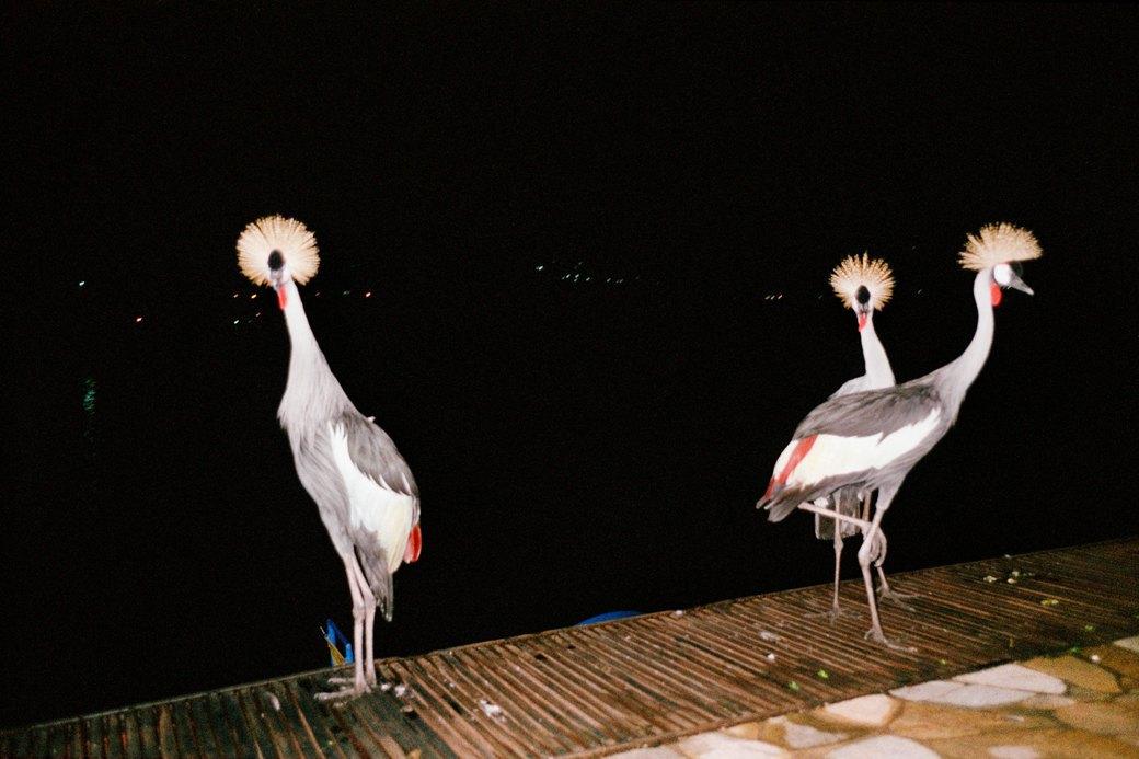 Сутенёры, лучники и золотая молодёжь: Фоторепортаж о ночной жизни в Уганде. Изображение № 17.
