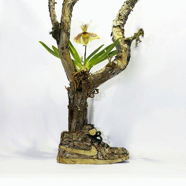 «Just Grow It!»: Известные модели кроссовок Nike из растений и цветов. Изображение № 6.