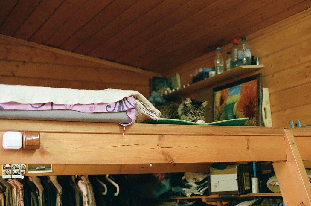 «Живая картина»: Как живет экопоселение, построенное на связи космоса и кедровых рощ. Изображение № 4.