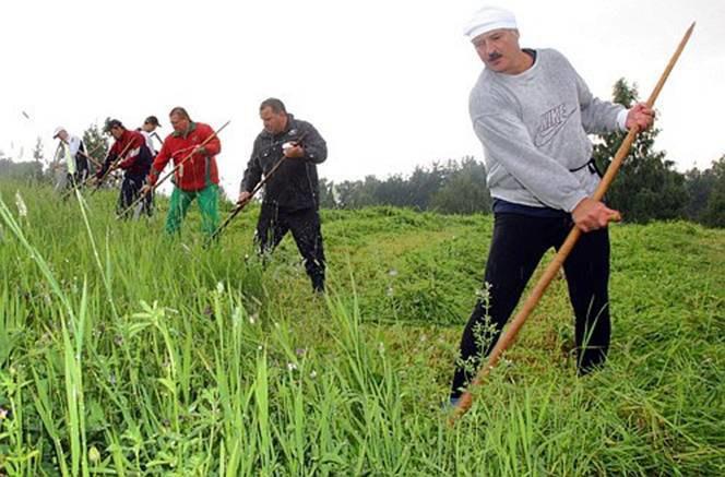 Из-за аномальной жары в Беларуси увеличился урожай конопли. Изображение № 1.
