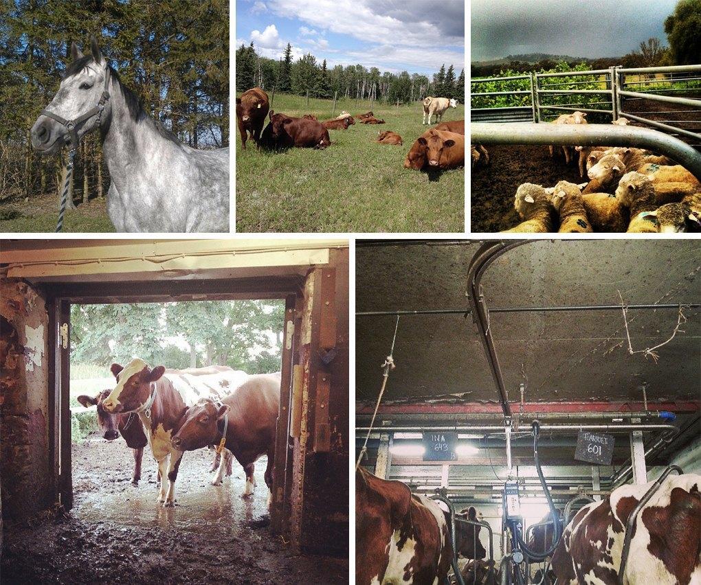 Что публикуют в своих Instagram фермеры разных стран. Изображение № 6.
