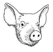 Задать жару: Основы приготовления мяса на открытом огне. Изображение № 63.