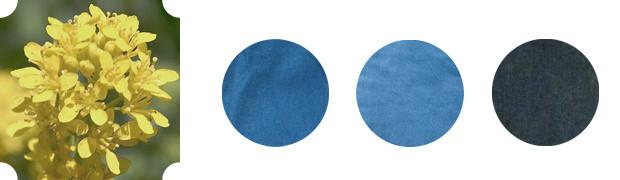 Оттенки синего: Все об индиго и вайде —двух известных благородных красителях. Изображение № 6.