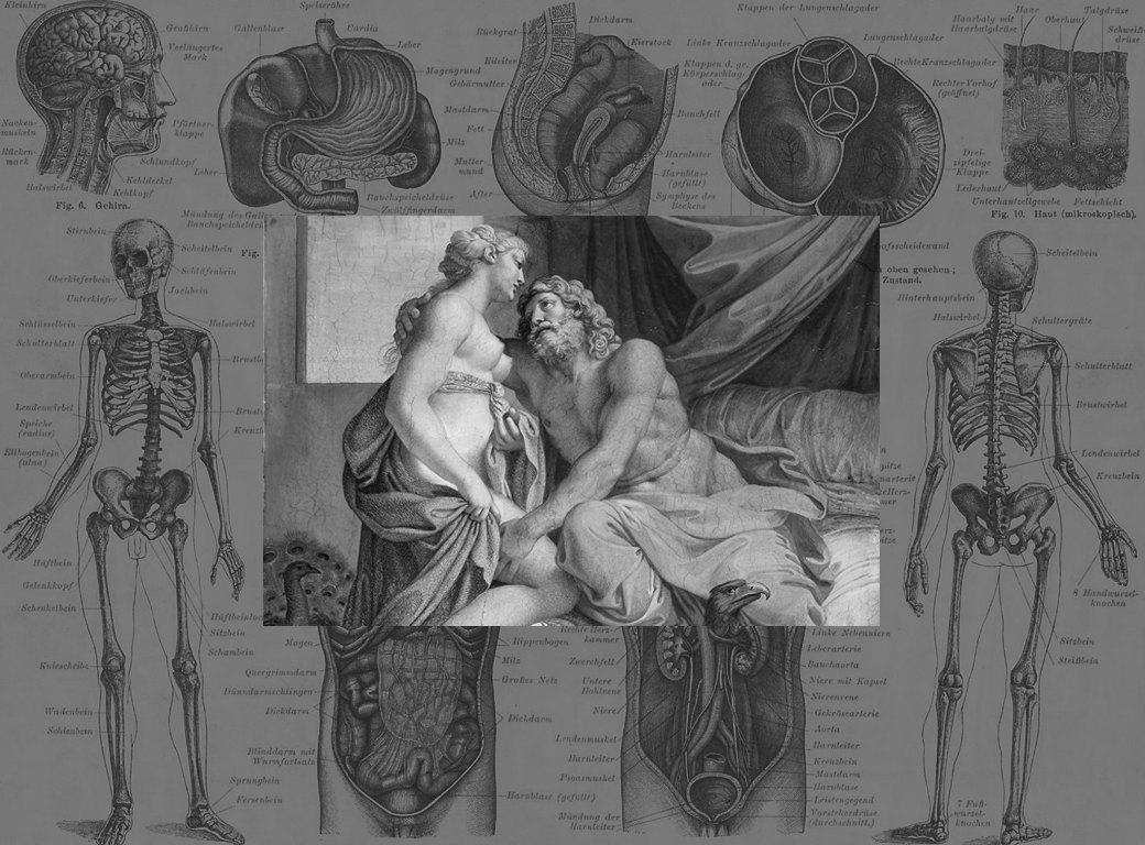 Неизвестный секс: Журналист Мэри Роуч разбирает историю импотенции с научной точки зрения. Изображение № 4.