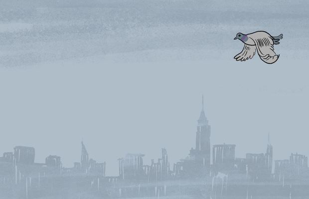 What is the mathematical probability of getting pooped on by a pigeon in NYC?