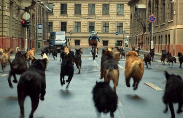 White God: Revenge horror, fairy tales, and a dog revolution in Budapest