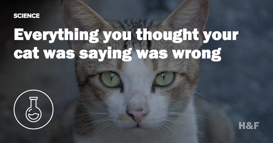 What your cat is really trying to tell you