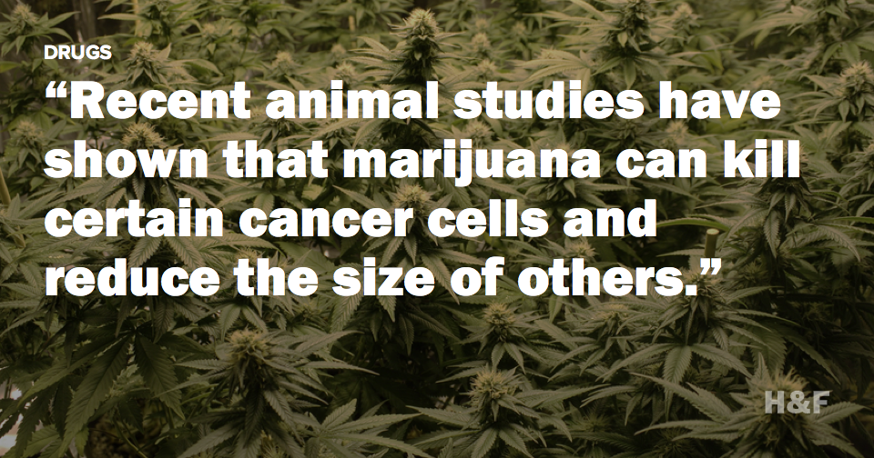 Weed kills (cancer cells)