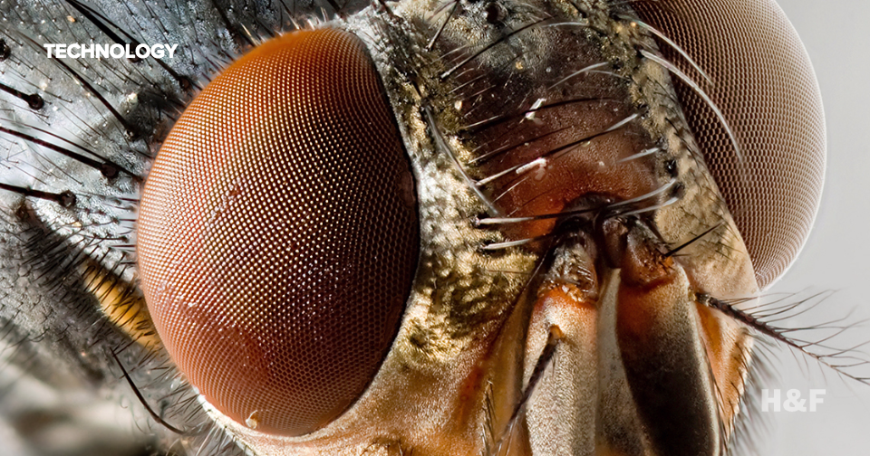Insect eyes are the newest inspiration for drone vision