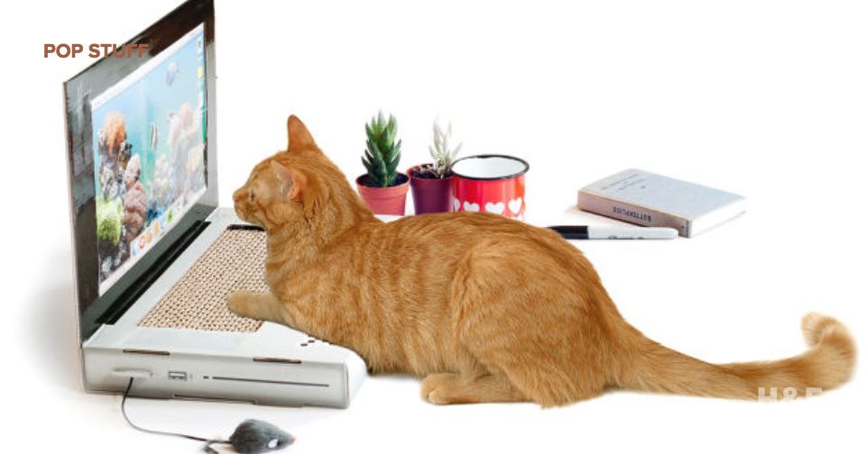 The cat laptop, with scratching post-keyboard, has arrived