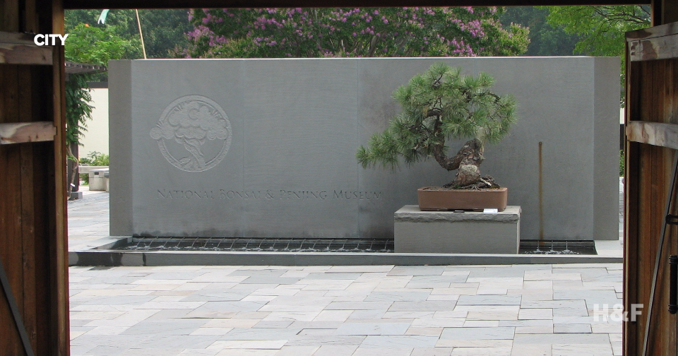 A 390-year-old bonsai tree that survived Hiroshima will be honored on bombing's anniversary