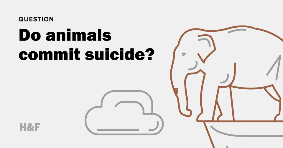 Do animals commit suicide?