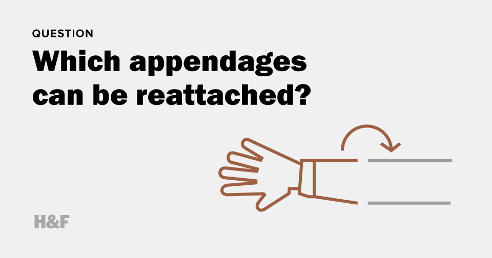Which appendages can be reattached?