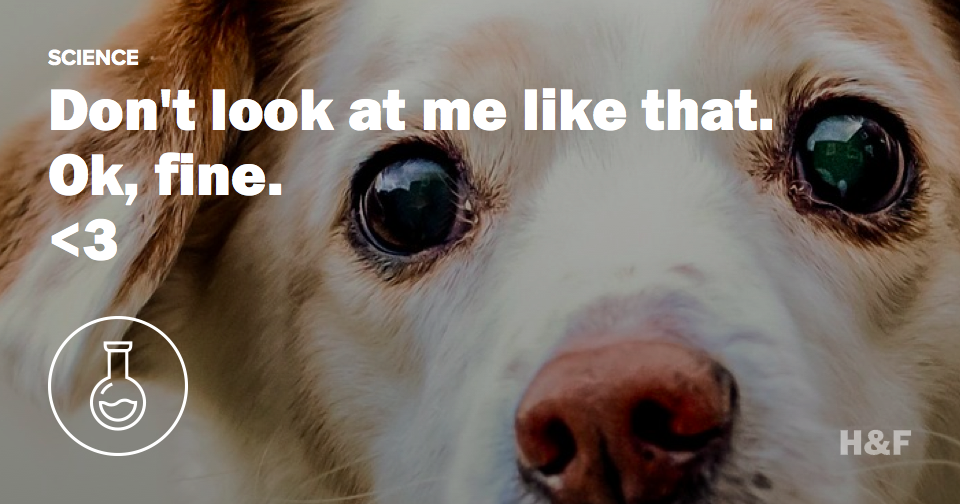 """Gazing dogs"" evolved to be more like us"