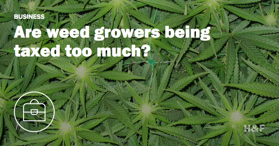 Are weed growers being taxed too much?