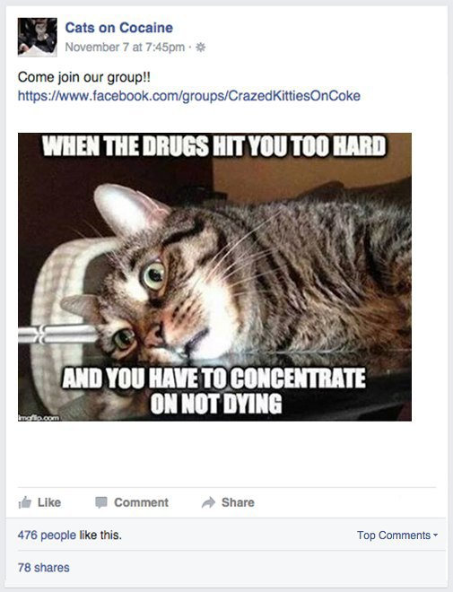 My life as a Facebook admin with coked-up cats and junkie Jesus. Image 5.