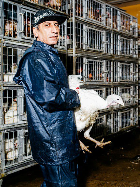 The messy business of NYC's live poultry industry. Image 4.