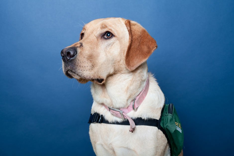 Inside the misunderstood world of psychiatric service dogs. Image 5.