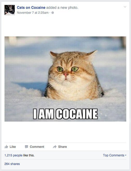 My life as a Facebook admin with coked-up cats and junkie Jesus. Image 3.
