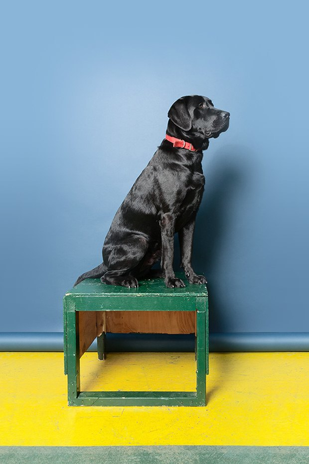 Inside the misunderstood world of psychiatric service dogs. Image 8.