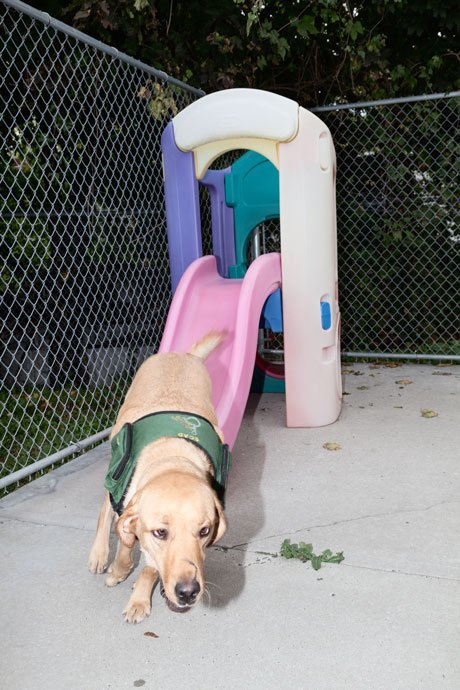 Inside the misunderstood world of psychiatric service dogs. Image 3.